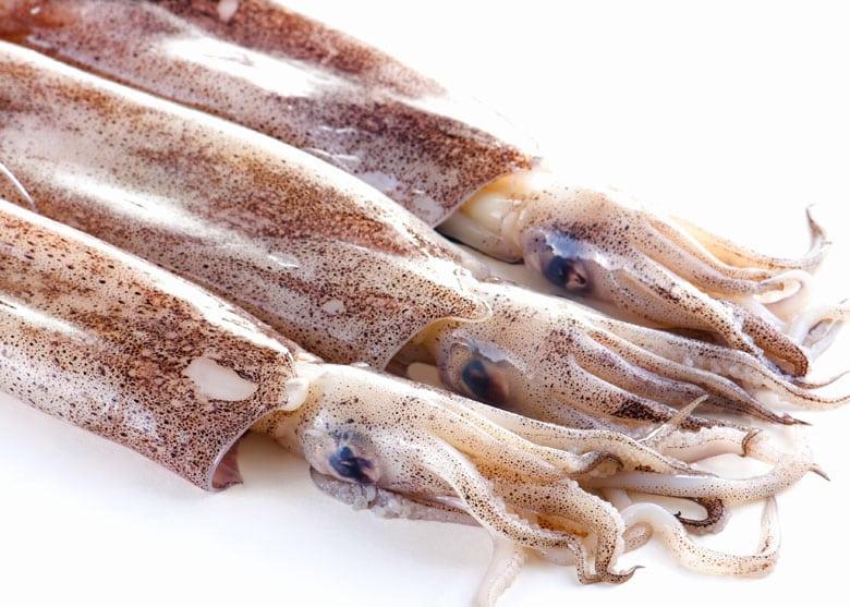 calamaro ristorante da lele di riccione